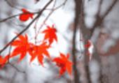 Puzzle Puzzle automne