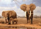 Puzzle d'éléphants
