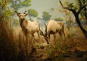 Scène de vie des animaux de la savane