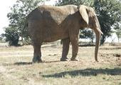 Puzzle Jeux de Puzzle : un éléphant