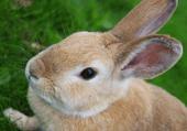 Jeu de puzzles : le lapin dans un jardin