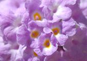 Une fleur qui nous rapelle l'été
