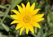 Puzzle photo d'une jolie fleur jaune