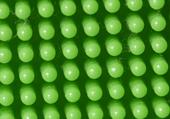 Puzzle : photo macro d'un clipo vert