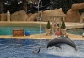 Puzzle Puzzles  de dauphins à Marineland