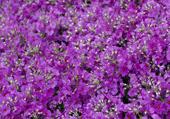 Puzzles de fleurs fleuries en été