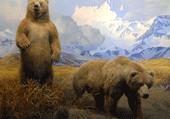 Puzzles de deux ours bruns
