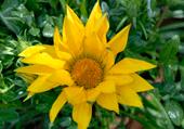 Puzzle Puzzles de fleurs : jaune comme le soleil