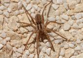 Puzzle d'une araignée
