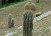 Cactus : attenion ça pique
