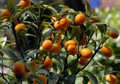 puzzle d'arbre fruitier