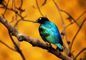 Puzzle oiseau: Parc de pologne