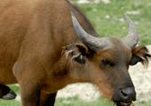 Animaux sauvages d'afrique