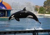 L'orque sportif
