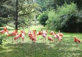 Puzzles flamants roses
