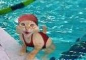 Jeu puzzle chat a la piscine