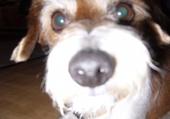 Egy le petit chien