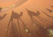 Puzzle Dromadaire dans le désert