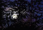 Puzzle en ligne Pleine lune