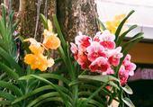 puzzle d'orchidées
