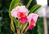 Puzzle Puzzle en ligne orchidee