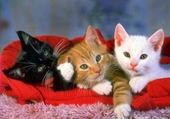 Puzzles p'itit chatons