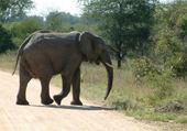 Puzzle Puzzle Eléphant d'Afrique du Sud