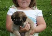 Léa et son petit chien