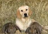 Puzzle gratuit chien lapin