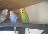Puzzles oiseaux