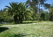 Puzzle en ligne jardin en fleurs