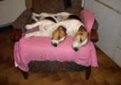 Puzzles les 2 chiens