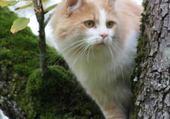 Puzzle le chat dans l'arbre