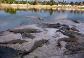 Puzzle lacs aux caimans Cote d'ivoire