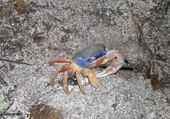 Super puzzle Costa rica - crabe