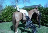 Puzzle en ligne a cheval