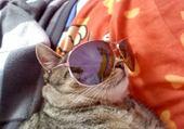 Puzzle en ligne mon chat Félix =)