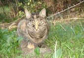 Puzzle chat dans l'herbe