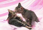 Puzzle en ligne petits chatons