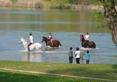 Puzzle gratuit baignade de chevaux