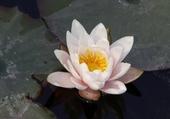 Puzzle fleur