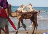 Puzzles tkt maroc saidia