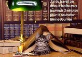 Jeux de puzzle : Beau chaton..