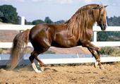 Jeux de puzzle : cheval dressage