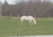 Puzzle en ligne cheval blanc