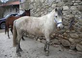 Puzzle gratuit puzzle cheval