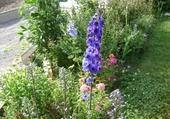 Jeux de puzzle : fleurs de mon jardin