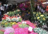 Puzzles marchémarché c aux fleurs de Nice