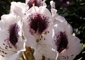 Jeux de puzzle : fleur de raymond