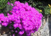 Puzzle gratuit fleurs d'été